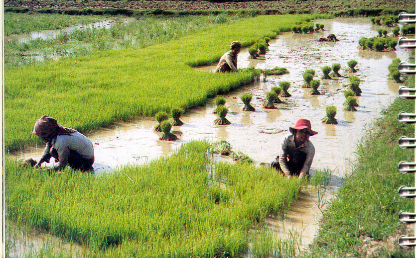 Philippine rice farmers socioeconomic status essay