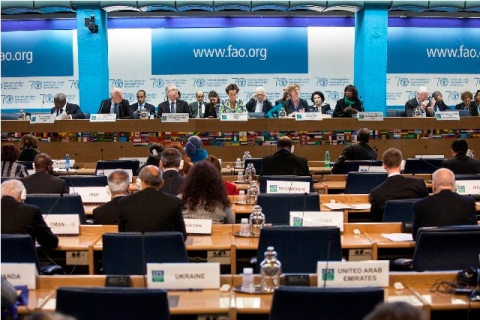 CFS 42nd session plenary, Day 1.  Photo by FAO.