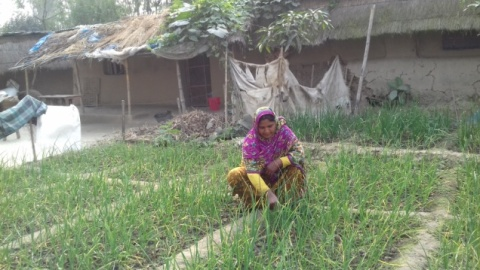 Woman in Dinajpur practicing homestead gardening. Photo by PROCASUR.